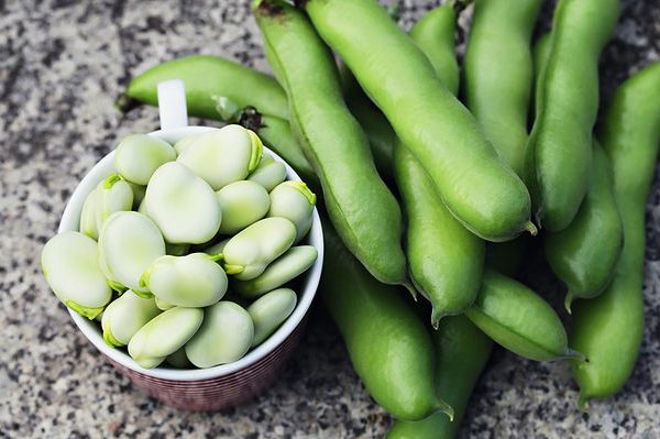 Broad-beans1