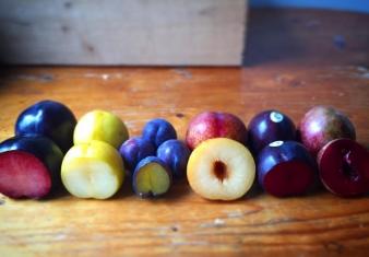 Late season stone-fruit