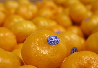 Local Citrus